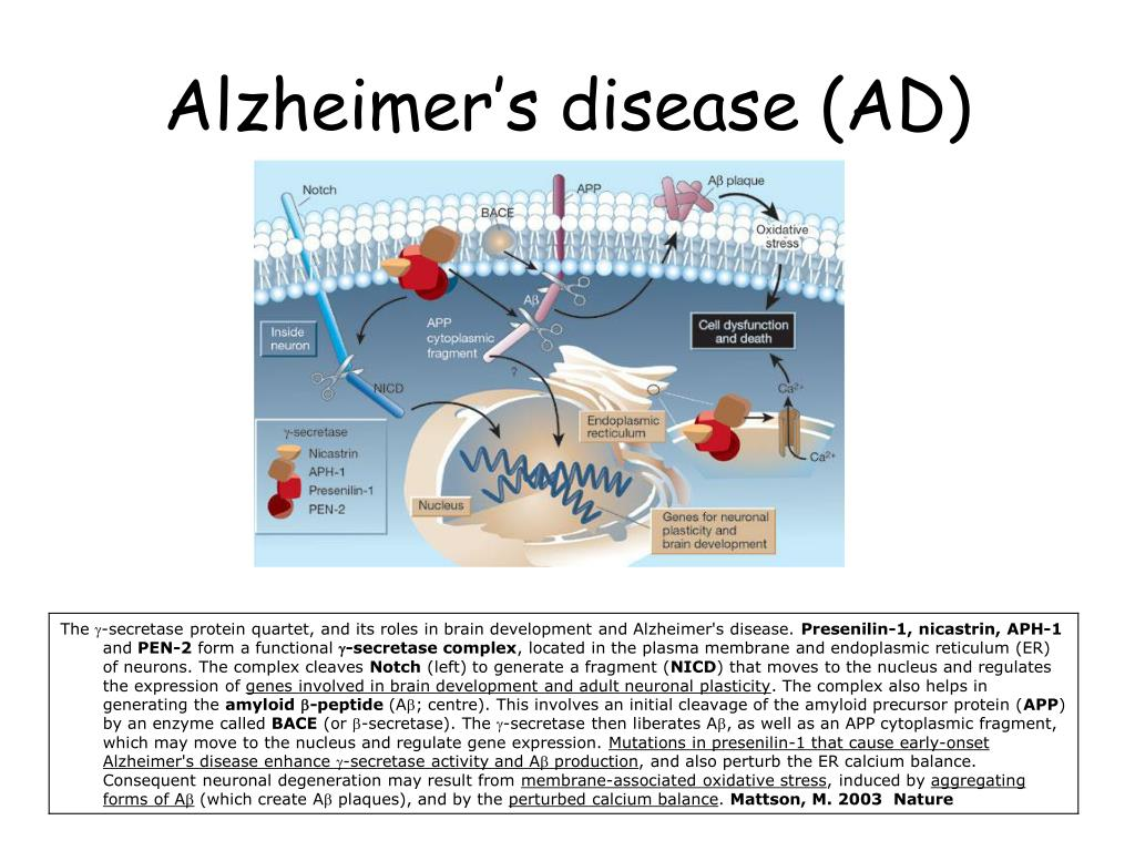 Alzheimer S Disease Nature Reviews