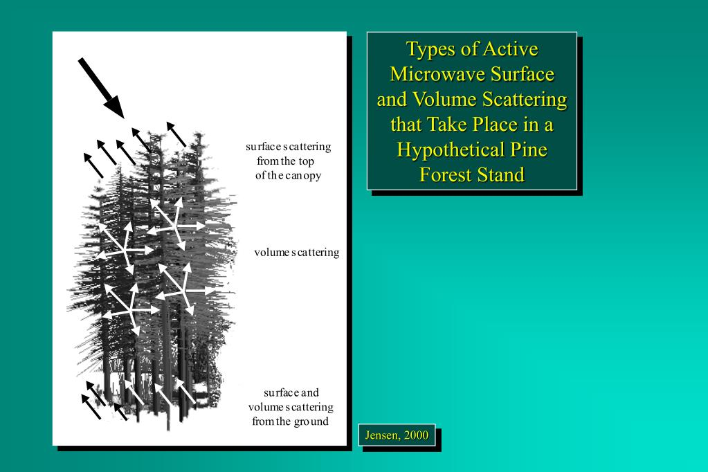 Types of Active Microwave Surface and Volume Scattering that Take Place in a Hypothetical Pine Forest Stand