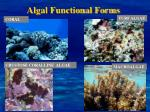 algal functional forms