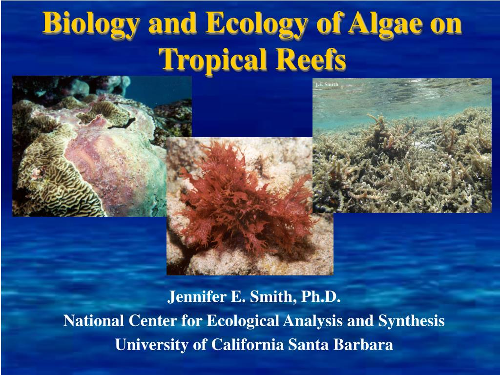 biology and ecology of algae on tropical reefs l.
