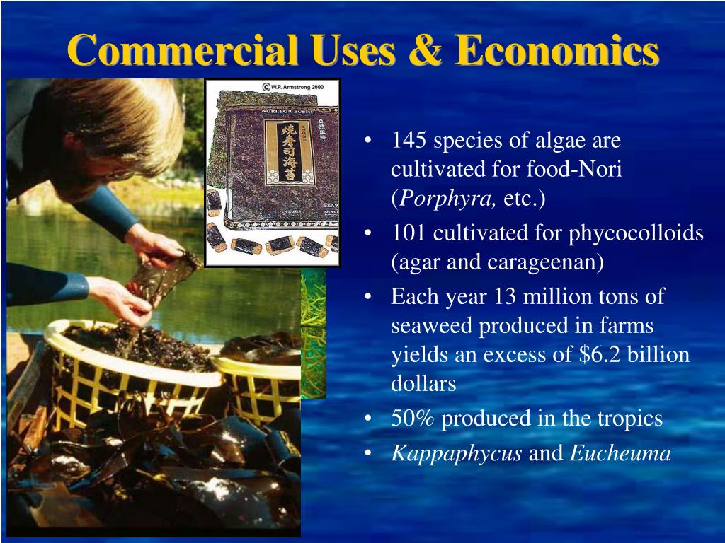 Commercial Uses & Economics