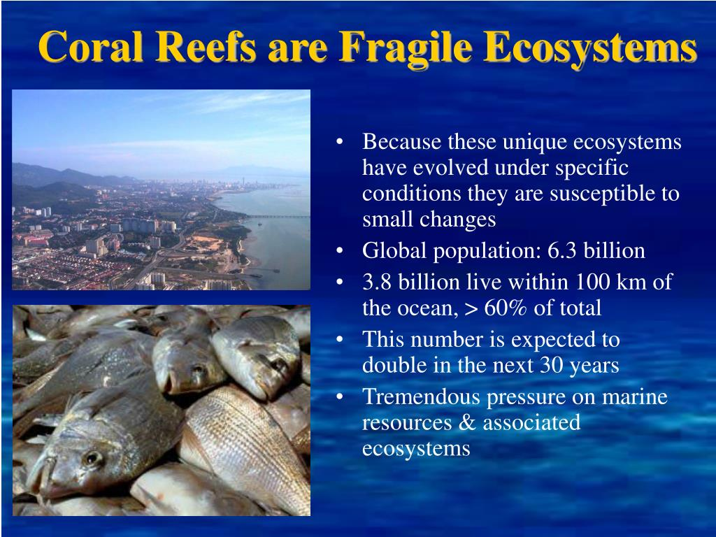 Coral Reefs are Fragile Ecosystems
