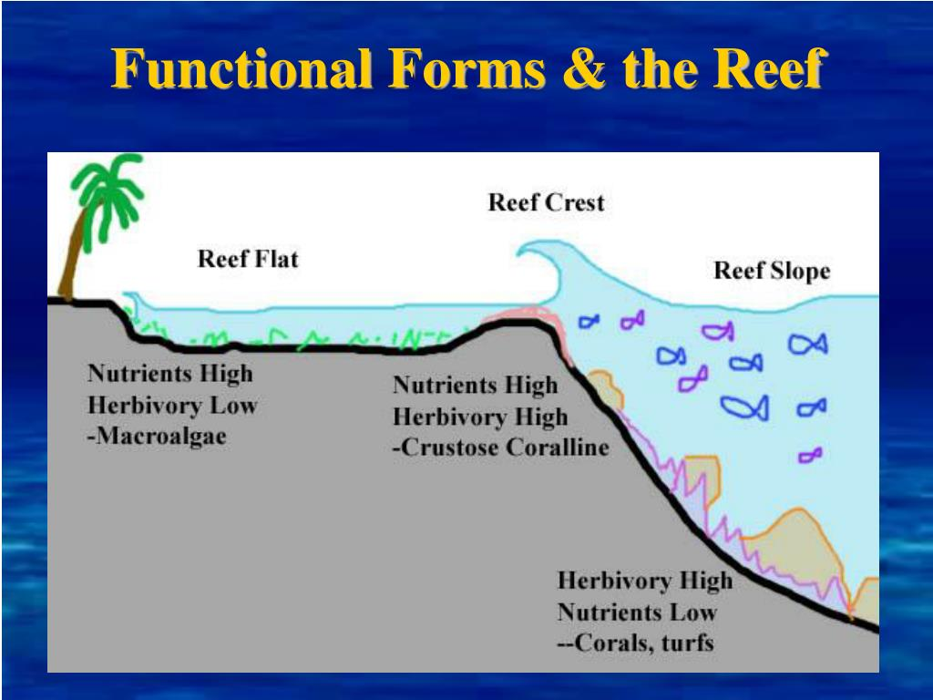 Functional Forms & the Reef