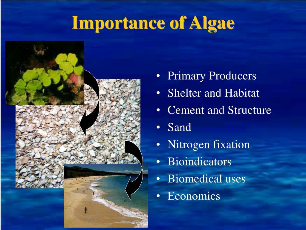 Importance of Algae
