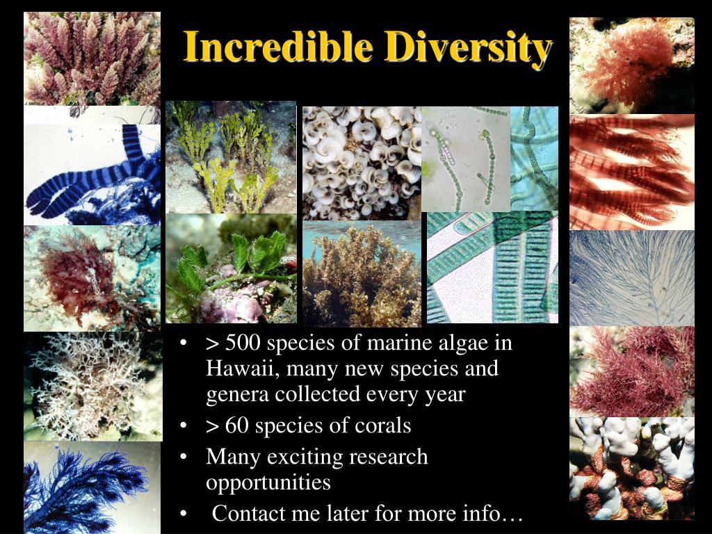 Incredible Diversity