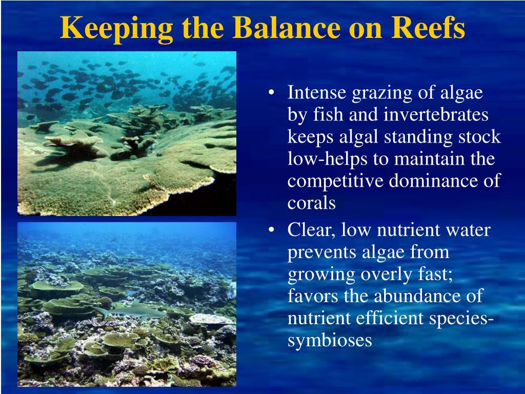 Keeping the Balance on Reefs