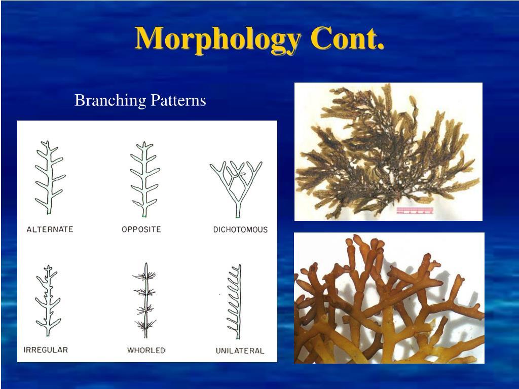 Morphology Cont.