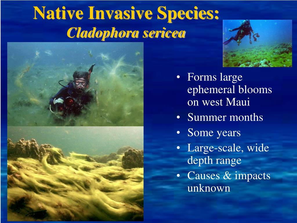 Native Invasive Species: