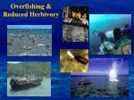 overfishing reduced herbivory