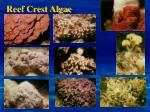reef crest algae