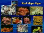 reef slope algae