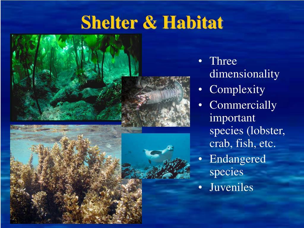 Shelter & Habitat