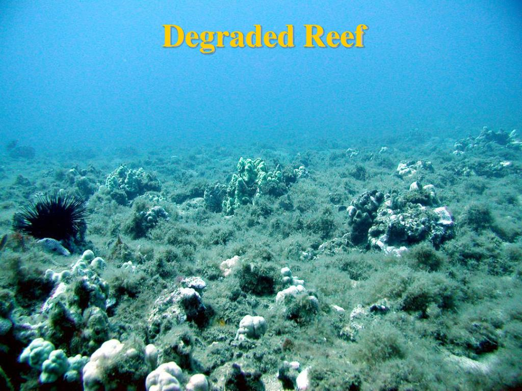 Degraded Reef