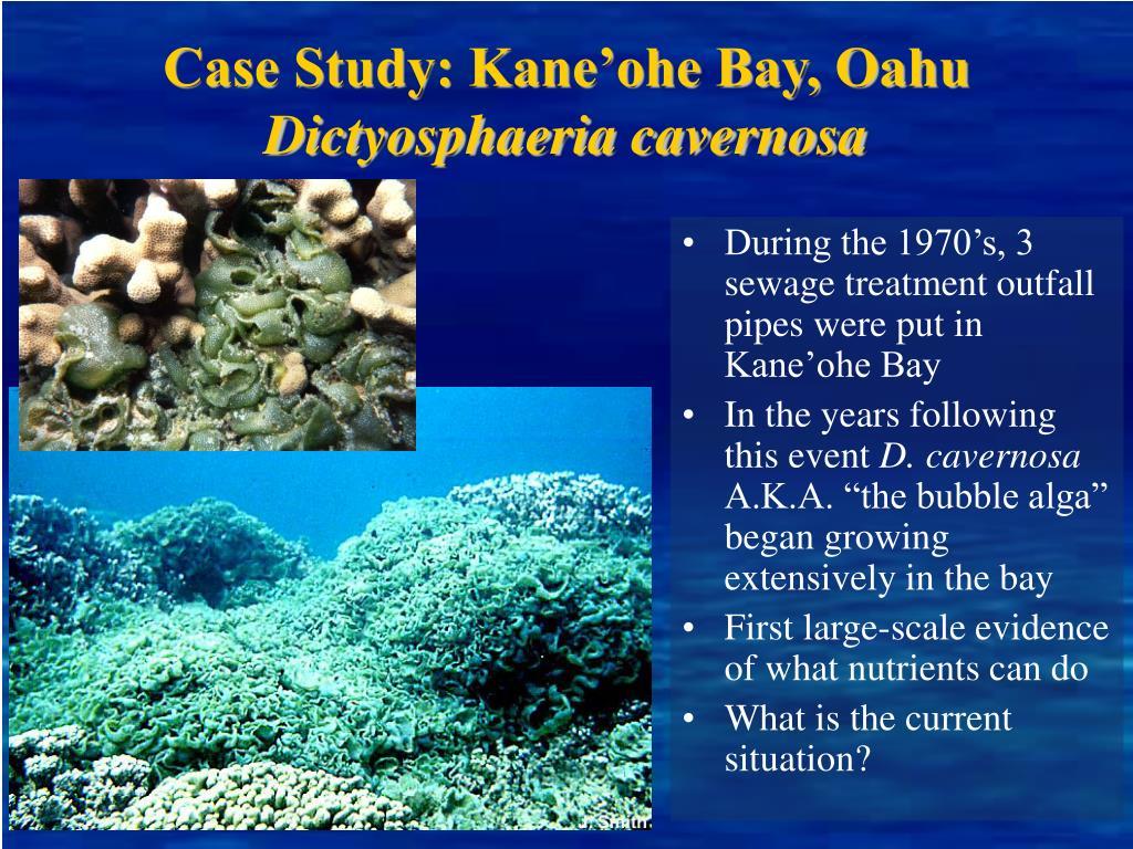 Case Study: Kane'ohe Bay, Oahu