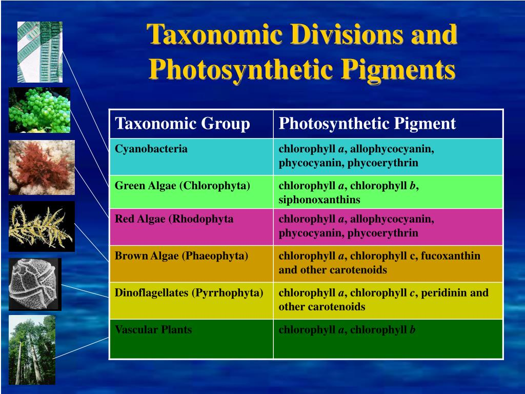Taxonomic Divisions and Photosynthetic Pigments
