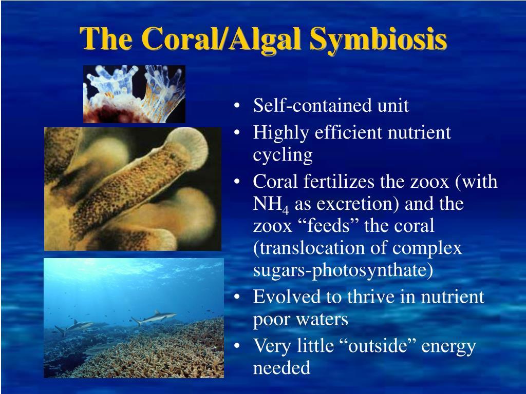The Coral/Algal Symbiosis