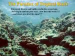 the paradox of tropical reefs