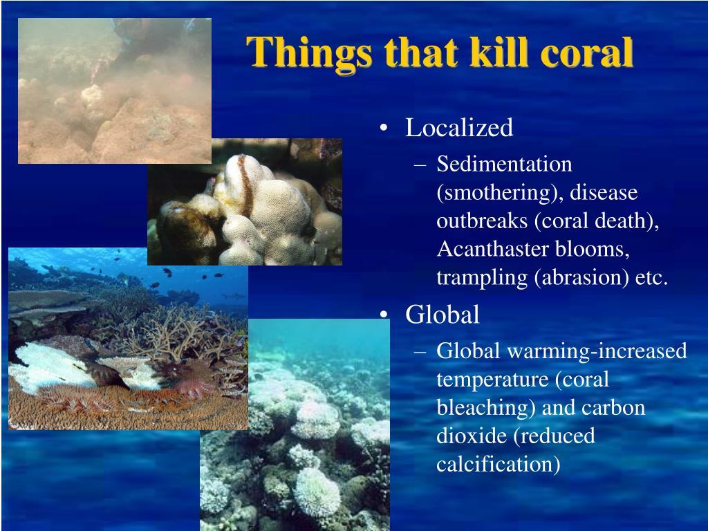 Things that kill coral