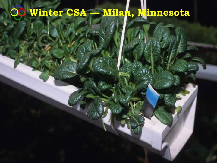 Winter CSA — Milan, Minnesota
