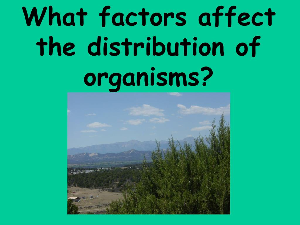 What factors affect the distribution of organisms?