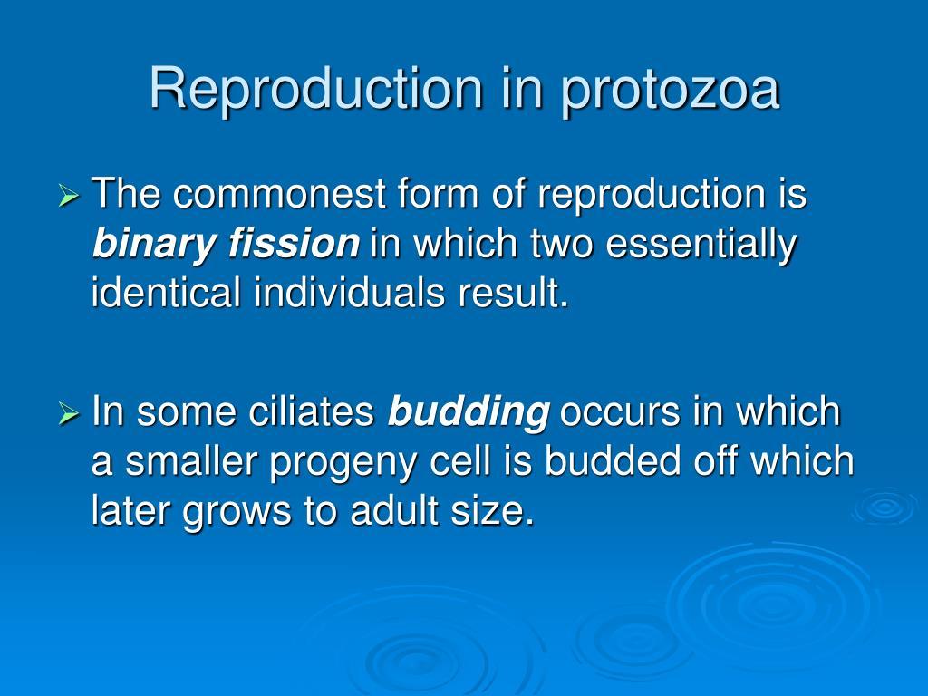 Reproduction in protozoa