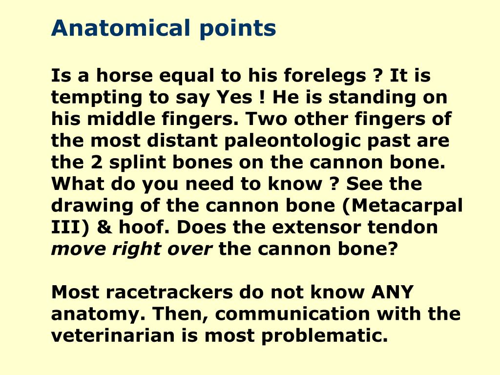Anatomical points