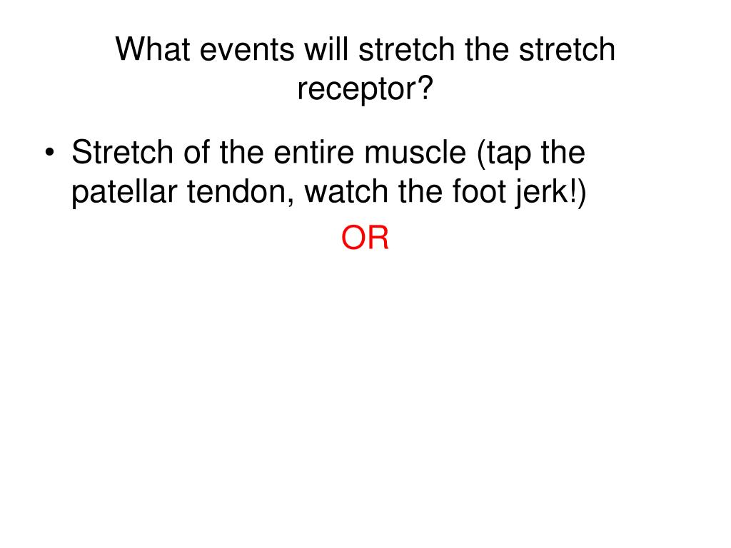 What events will stretch the stretch receptor?