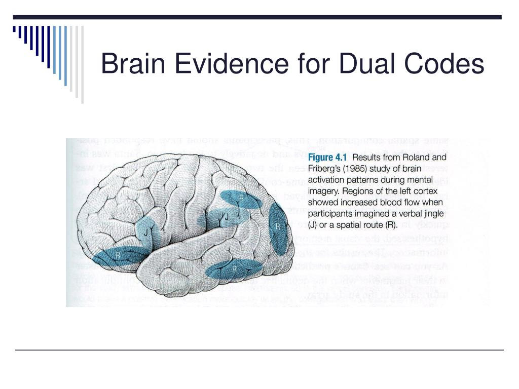 Brain Evidence for Dual Codes