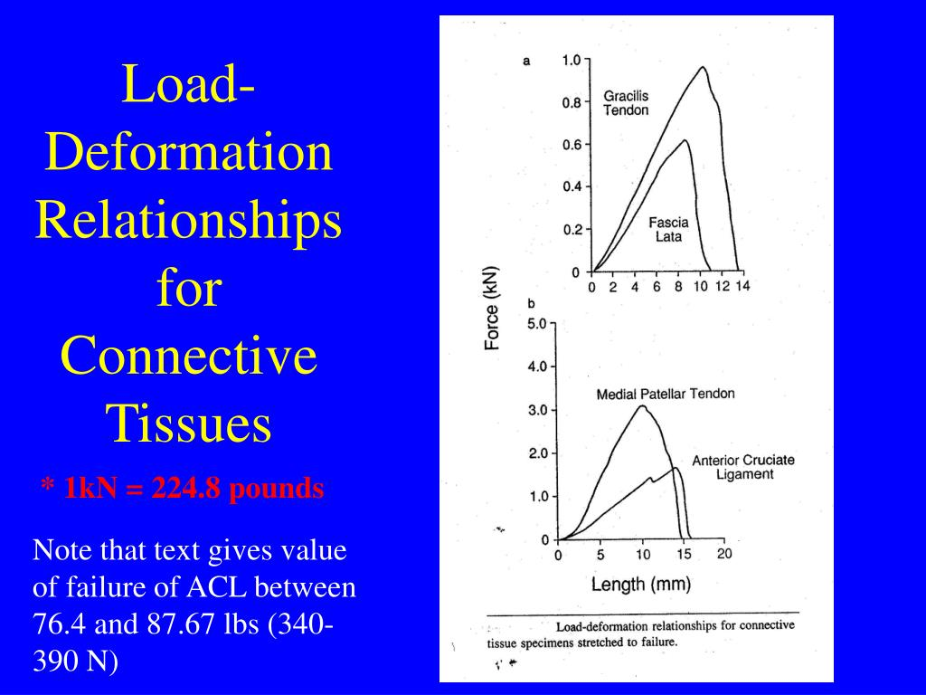 Load-Deformation Relationships for Connective Tissues