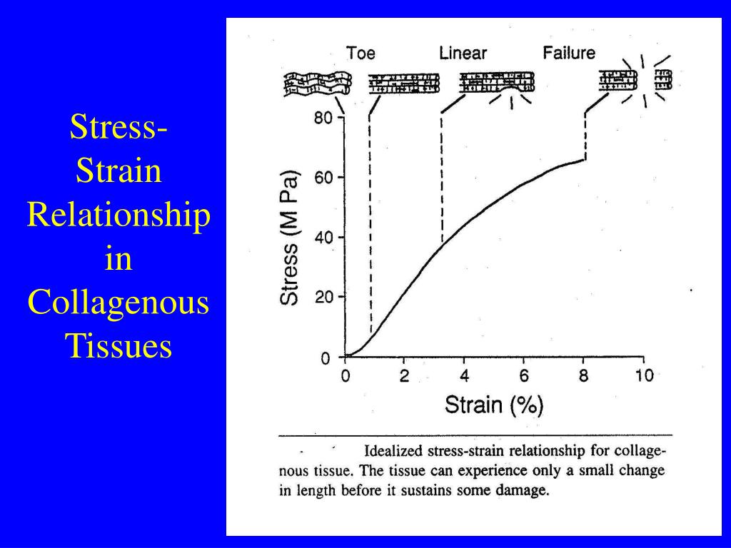 Stress-Strain Relationship in Collagenous Tissues