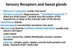 sensory receptors and sweat glands