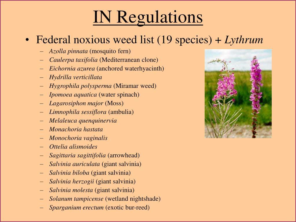 IN Regulations