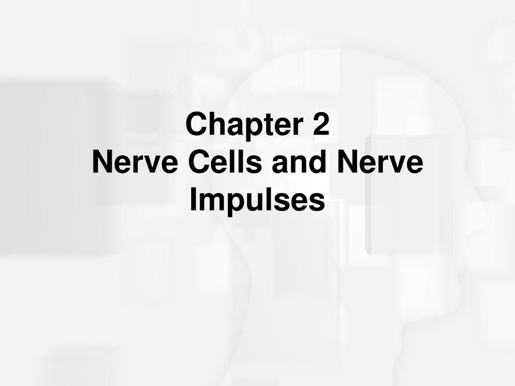 chapter 2 nerve cells and nerve impulses l.