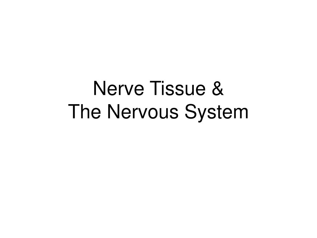 nerve tissue the nervous system l.