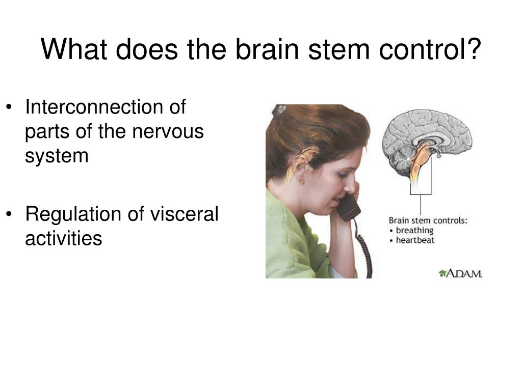 Interconnection of parts of the nervous system