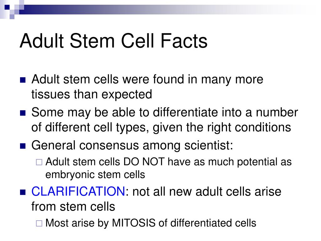 adult cells stem on Information