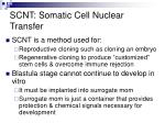 scnt somatic cell nuclear transfer