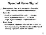 speed of nerve signal