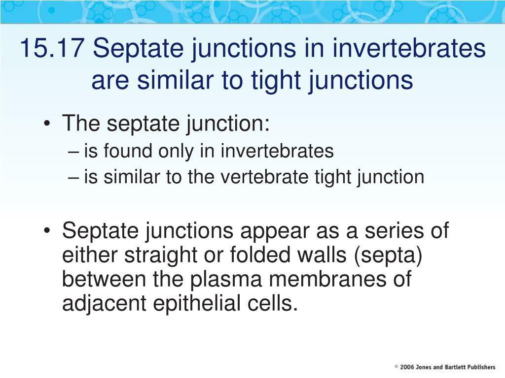 15.17 Septate junctions in invertebrates are similar to tight junctions