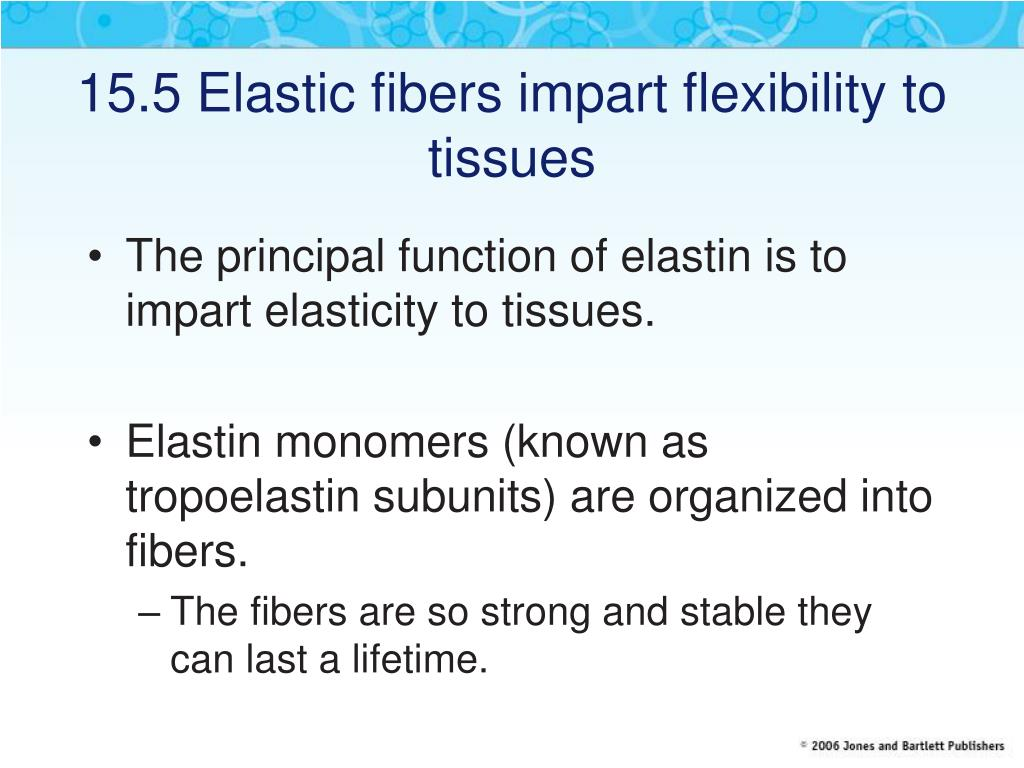 15.5 Elastic fibers impart flexibility to tissues
