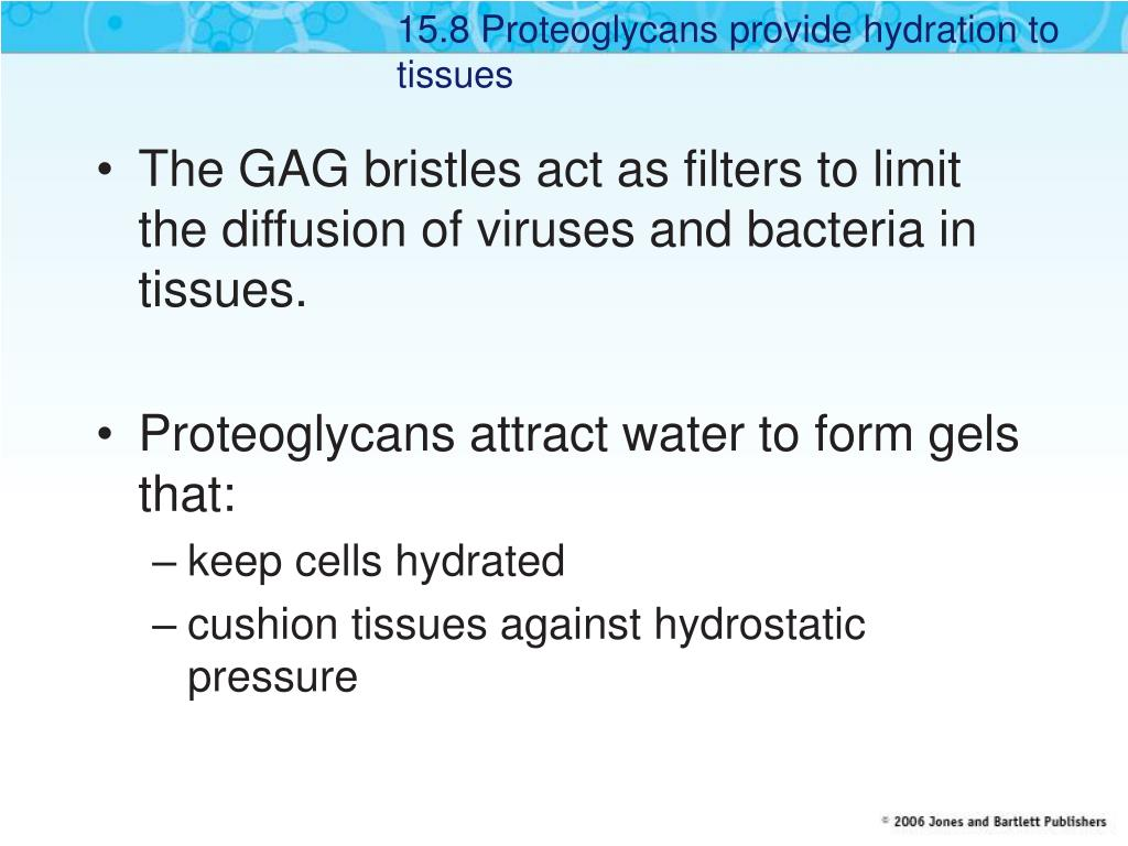 15.8 Proteoglycans provide hydration to tissues