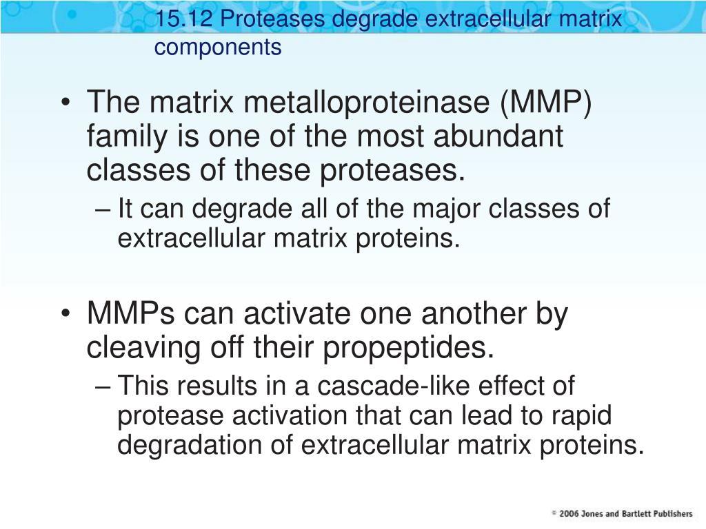 15.12 Proteases degrade extracellular matrix components