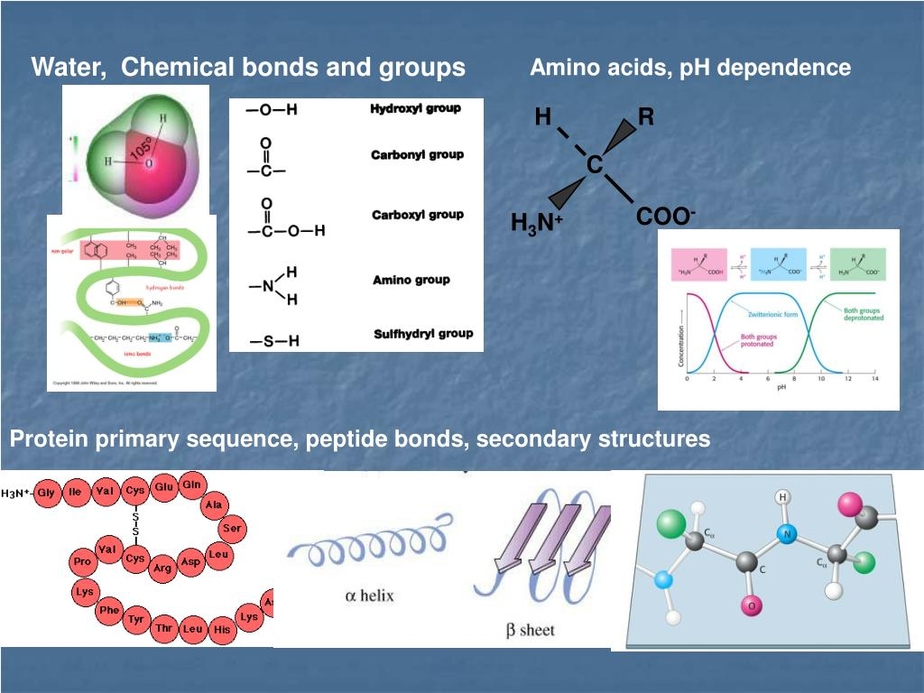 Water,  Chemical bonds and groups