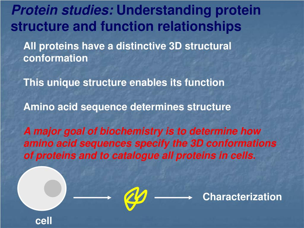 Protein studies: