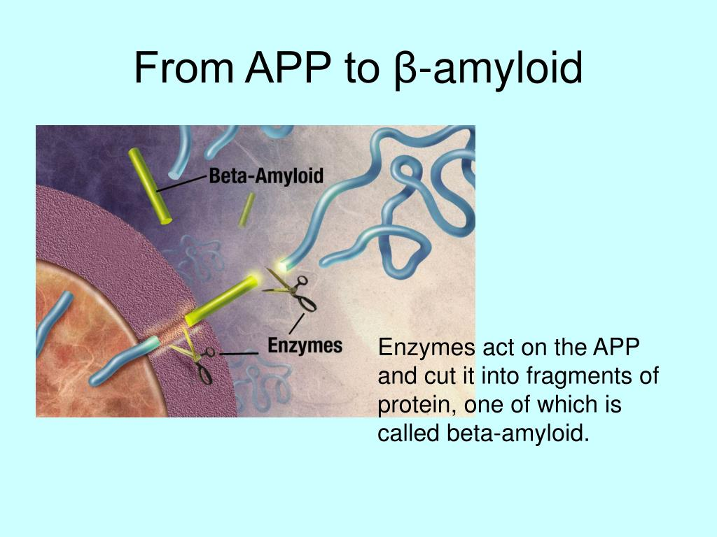 From APP to β-amyloid