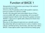 function of bace 1