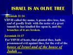 israel is an olive tree