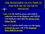the redeemed olive tree is the house of jacob in messiah