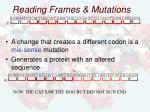 reading frames mutations28