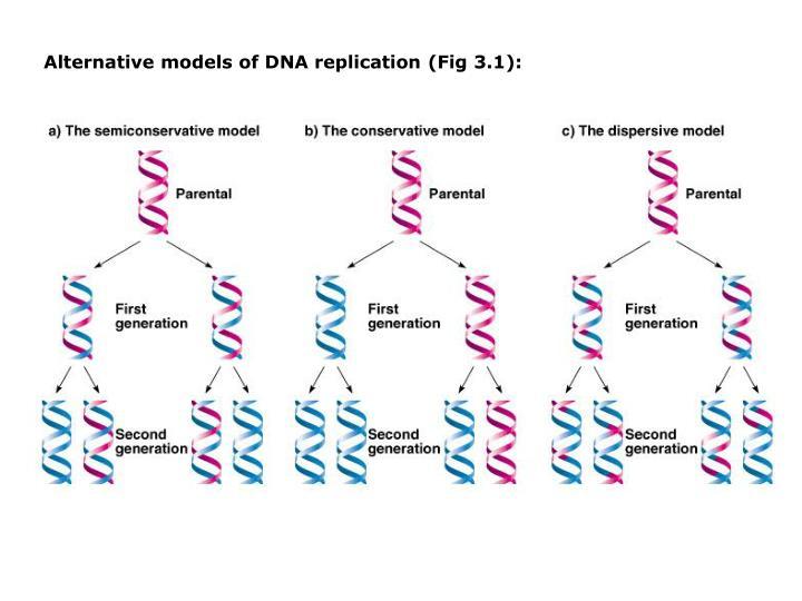 Alternative models of DNA replication (Fig 3.1):